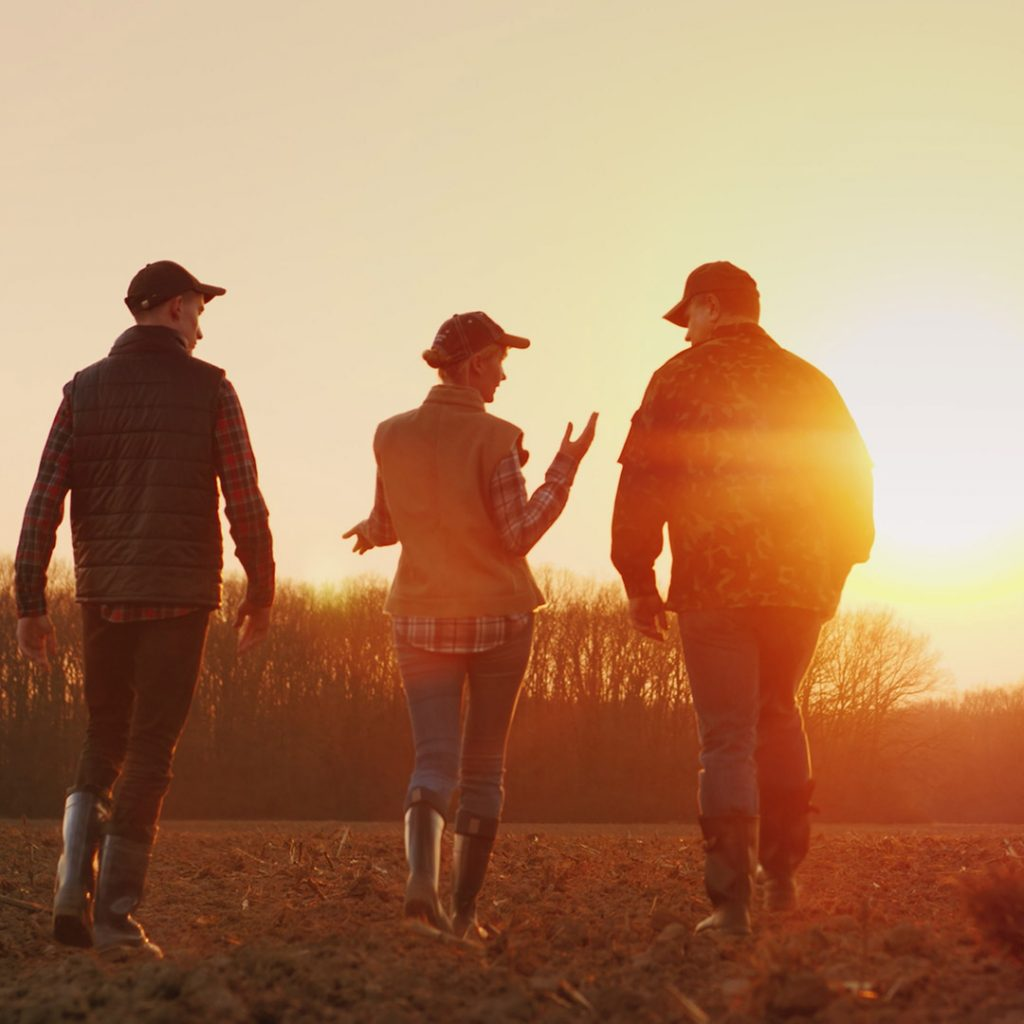 Three people walking through a field of stubble at sunset
